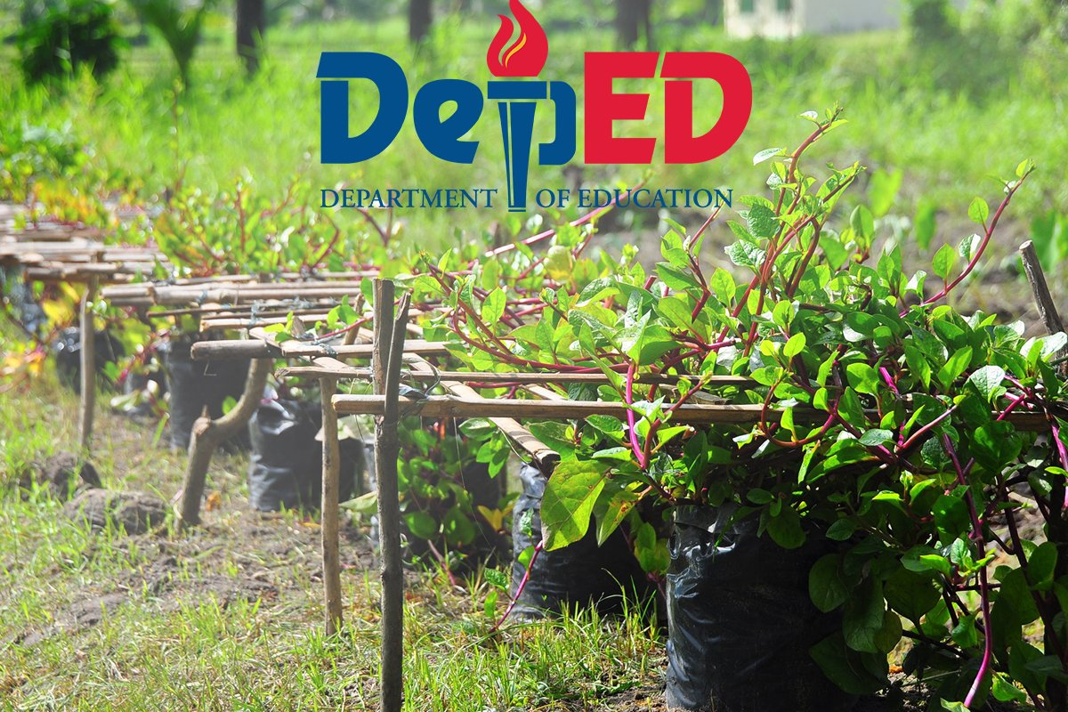 DepEd revives 'School Inside a Garden' program - Flying ...