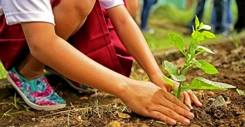 DENR, DepEd, pushing to plant trees in schools