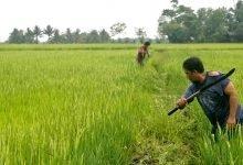 Photo of NFA pinadali ang pagbili ng palay sa Pangasinan