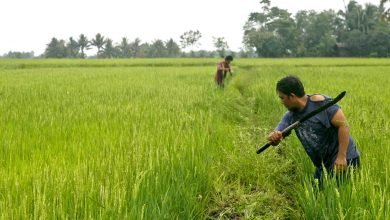 Photo of Reviving the Philippines' Food Basket: Mindanao