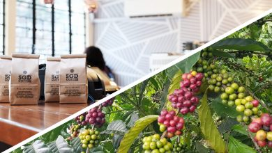 Photo of Bukidnon and SGD Coffee Take Home 2019 Awards in Milan for Coffee Roasters