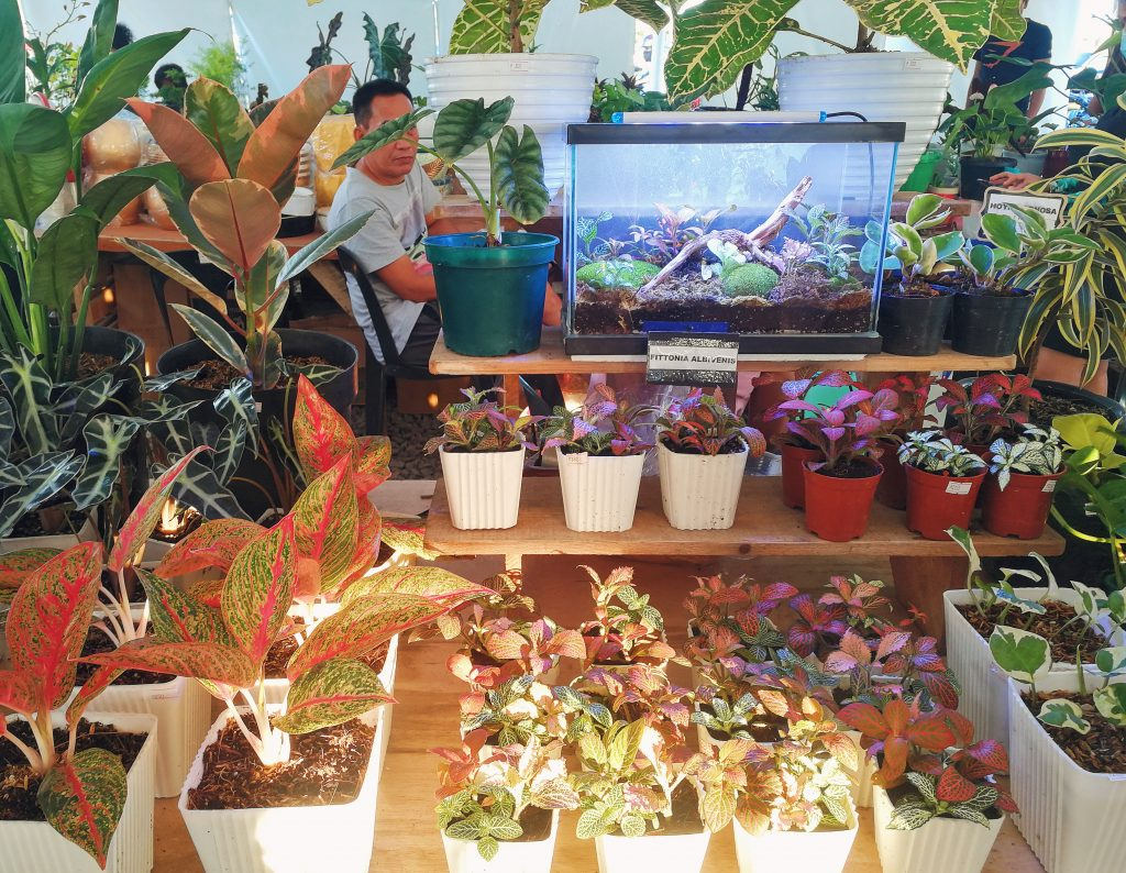 A variety of plants sold at just prices
