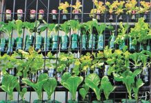 Photo of 2021: A Promising Year for Urban Gardening in the PH