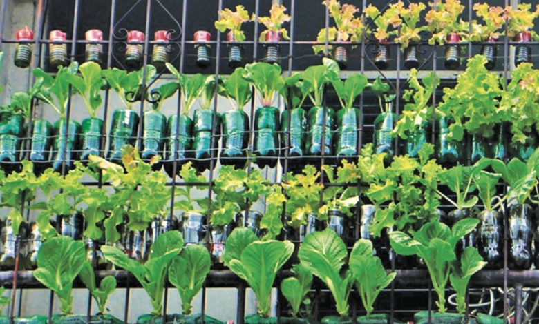2021: A Promising Year for Urban Gardening in the PH