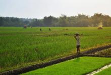 Food security vs food self-sufficiency